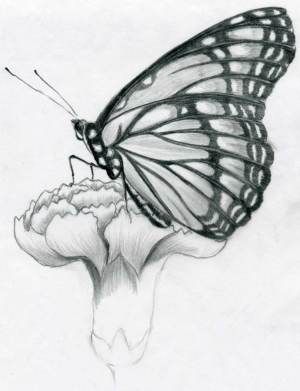 drawings pencil butterfly sketches easy drawing flower sketch draw wings butterflies practice shaded observe darkest select parts nature flowers shading