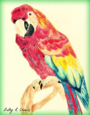 parrot pencil drawings colored easy drawing sketches hard pretty colorful pencils amazing blend trying learn seen ve betty step blending