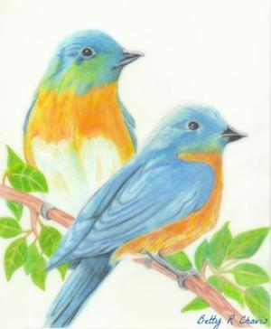 pencil colored birds bird drawing colorful drawings easy sketches spring sc winter paintingvalley