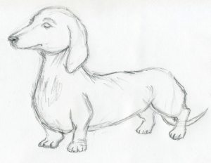 dog sketches drawings easy pencil sketch drawing cool animals simple face dachshund outline flowers head sketching enlarge