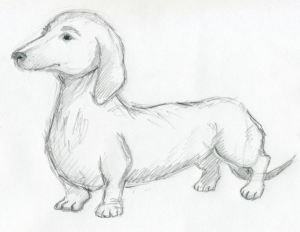 dog sketches easy drawings