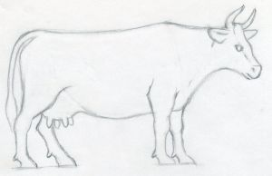 draw cow easy drawings sketches drawing painting step way parts enlarge