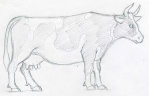 draw cow easy drawings sketches cows step holstein way fur enlarge