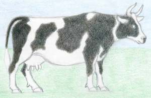 cow draw drawing easy drawings step pattern pencil sketches dairy nef atot iv official thread getdrawings paintingvalley way enlarge