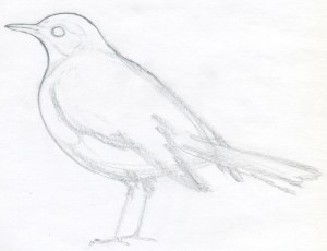 bird draw easy drawing sketches drawings basic birds simple pencil sketch step animal outline read know need paintingvalley shape enlarge