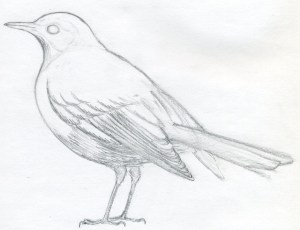 draw bird easy drawings sketches birds drawing pencil realistic simple basic sketching outline drew crow looking