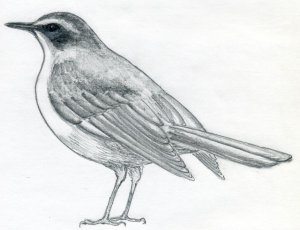 draw bird easy drawings simple sketches master fundamentals quickly approach ll general