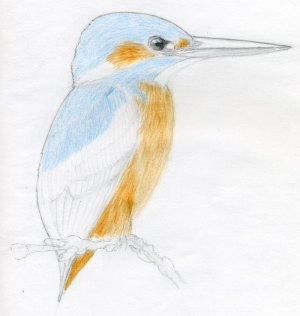 draw bird drawings easy sketches simple kingfisher enlarge pencil painting parts