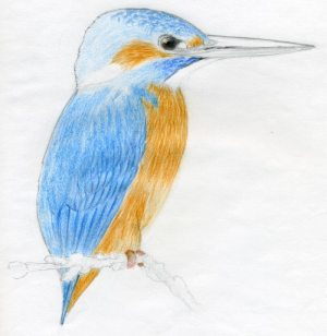 draw bird easy sketches drawings feathers head feather kingfisher enlarge outlines
