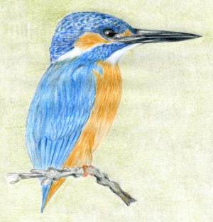 bird draw drawing kingfisher easy drawings animals sketches simple copy very way
