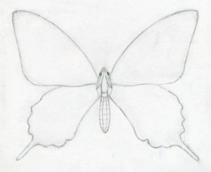 butterfly easy drawings draw butterflies drawing sketches pencil outline wings enlarge painting surprisingly
