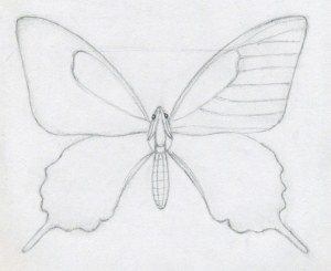 easy draw butterfly drawings outline butterflies drawing sketch pencil sketches step wings contour wing buterfly butter animals pattern angel bing