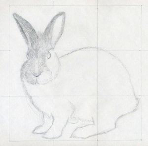 drawings pencil rabbit draw easy simple sketches animal drawing strokes continue very gently push sure enlarge источник yahoo