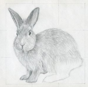 drawings draw rabbit easy sketches drawing bunny rabbits pencil simple animals parts eyes nose cartoon bunnies fur sketching around area