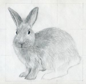 draw drawings rabbit drawing easy pencil sketches bunny rabbits head value fur facial features animals graphite eyes necessary parts sketching