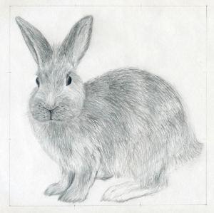 draw rabbit drawings easy sketches fur enlarge
