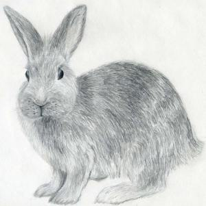 rabbit draw drawing realistic sketches animal drawings bunny pencil easy inspiration rabbits animals step hair monkey face sketch fur parts