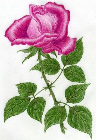 Rose Leaf Drawing : drawing, Simple, Steps