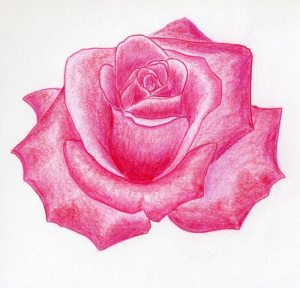 rose draw drawings drawing roses pink flowers flower easy crayon sketches sketch simply easily simple pencil quickly colored getdrawings enlarge