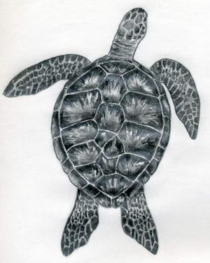 turtle sea draw easy drawings drawing sketches outline turtles step simple realistic shell animals sketch enlarge tattoo pencil skills marine