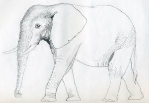 animals drawings easy sketches draw simple elephant drawing animal outline pencil realistic beginners easiest cool paintingvalley stretched fingers think ll