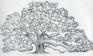 tree oak draw drawing drawings tattoo clip trees sketch easy sketches realistic outline angel pencil cliparts tattoos resolution sketching amazing