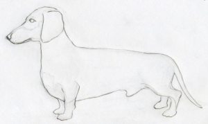 draw dog easy drawings dogs dachshund drawing sketches face animal enlarge dachshunds sketch breed drawn exceptional yes library clipart while