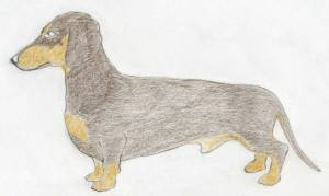 dog draw easy drawings sketches drawing realistic shading