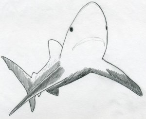 draw shark drawing easy drawings sketches mouth outline sea eyes basic