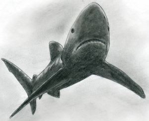 draw shark easy drawing drawings sketches pencil fish mouth paper simple animals teeth basic tutorial careful swab strokes soften tissue