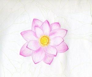 flower drawings drawing sketches lotus realistic easy flowers sketch pink simple step pencil cliparts blossom getdrawings bing very fun cartoon