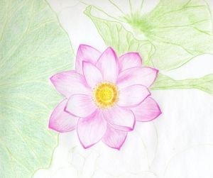 flower flowers easy lotus drawings drawing pencil simple sketches coloring layer cliparts line leaves getdrawings basic paintingvalley clip dark library