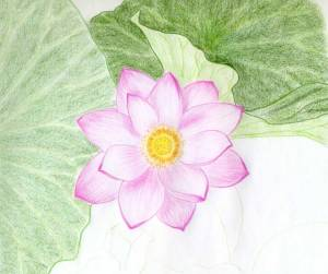 flower flowers drawings easy drawing lotus draw sketches step pencil pink simple different leaves daisy type rose enlarge quite lovely