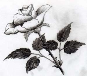 drawings rose easy drawing sketches dark roses difficult pencil flowers tone shades simple different colored enlarge would