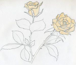 rose easy drawings sketch sketches drawing simple flower template pencil flowers stem getdrawings enjoy sketching