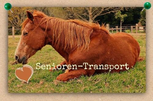 EASYRider SeniorenTransport