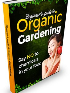 Beginner's Guide to Organic Gardening