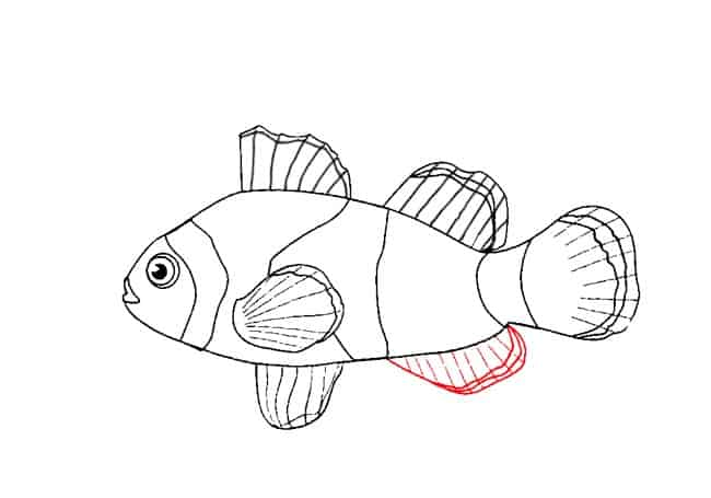 How To Draw A Clownfish Step By Step