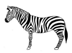 zebra draw easy step animals