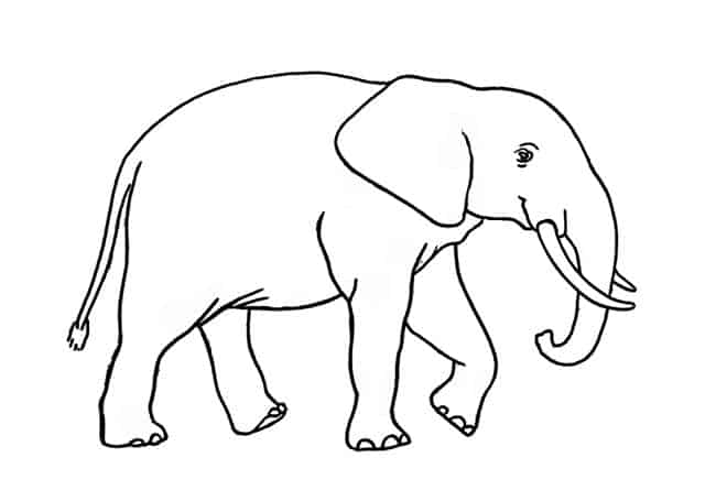 How To Draw An African Elephant Step By Step Easy Animals 2 Draw