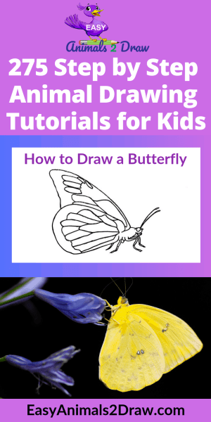 butterfly side draw drawing easy step animals