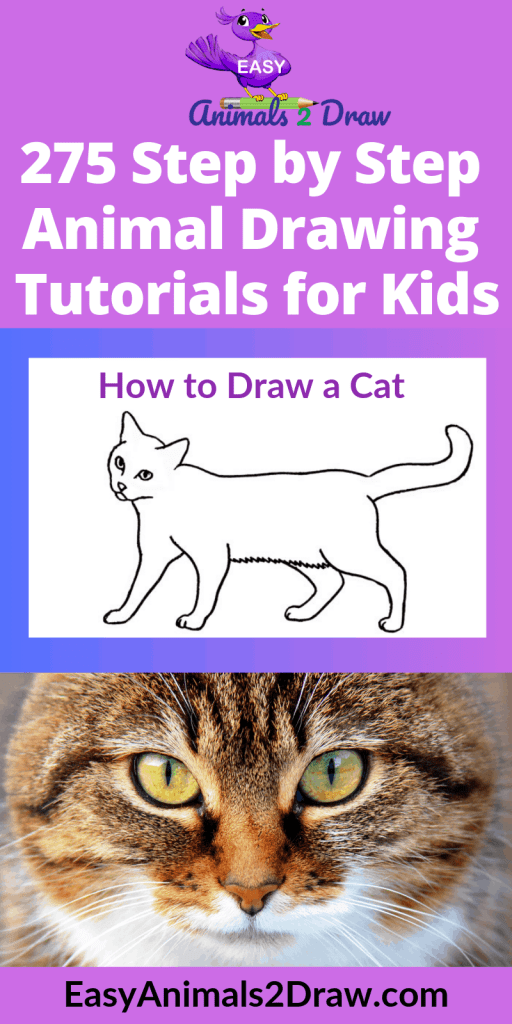 Pinterest image How to Draw a walking cat