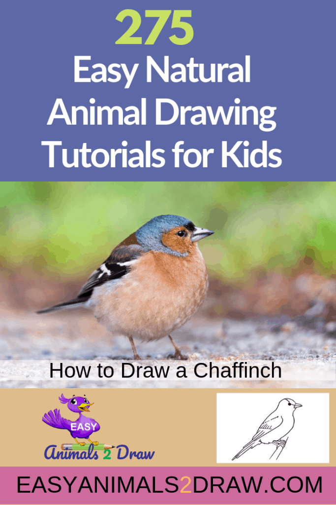 Pinterest image how to draw a Chaffinch