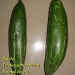 Pointed Gourd Health Benefits, Usage – Ayurveda Details