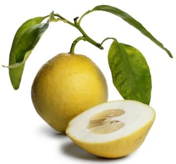 Citron Fruit: Citrus medica Uses, Dose, Research, Side Effects