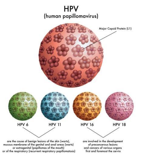 HPV types