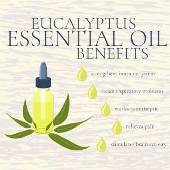 Eucalyptus Oil Nilgiri Tel Benefits How To Use Dose