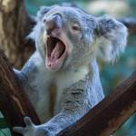Why We Yawn? 13 Ayurvedic Tips To Stop Excess Yawning