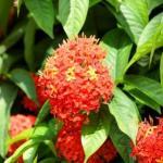 Ashoka Remedies: Heavy Periods, White Discharge, Gastritis