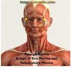 Apanga Marma: Location, Components, Effect Of Injury